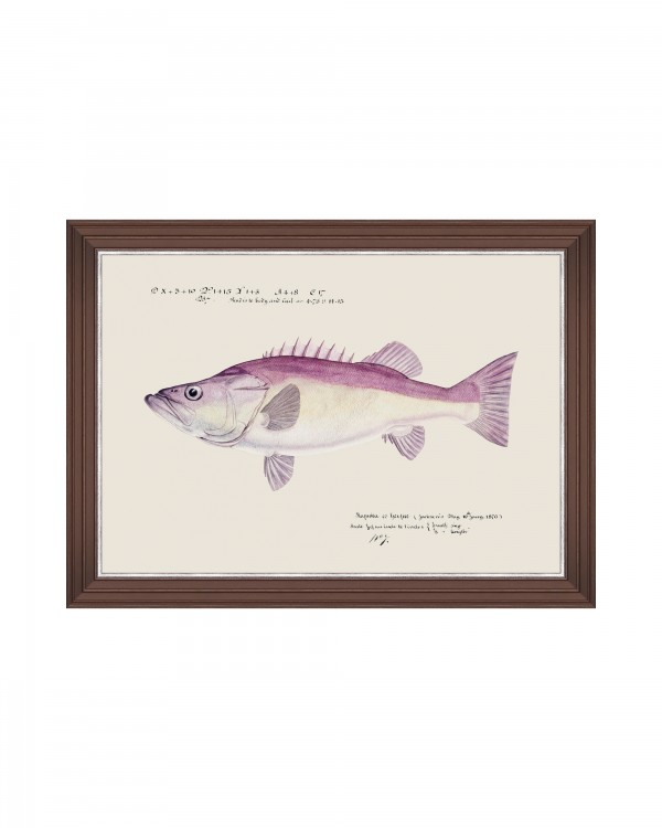 MEDITERRAEAN FISH - GROUPER by F Clark Framed Art