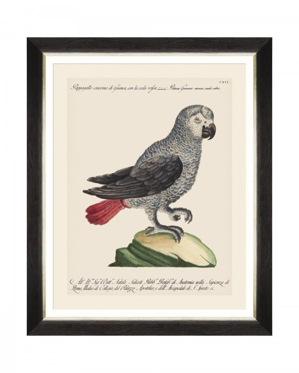 PARROTS OF BRAZIL VI Framed Art