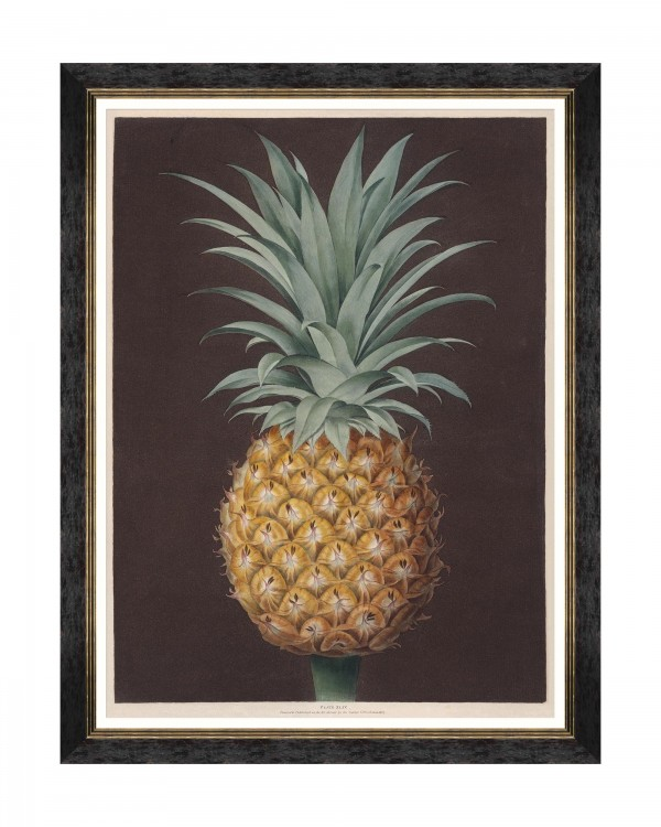 PINEAPPLES OF ANTIGUA - THE HAVANNAH PINE BY BROOKSHAW Framed Art