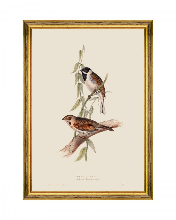 REED BUNTING Framed Art