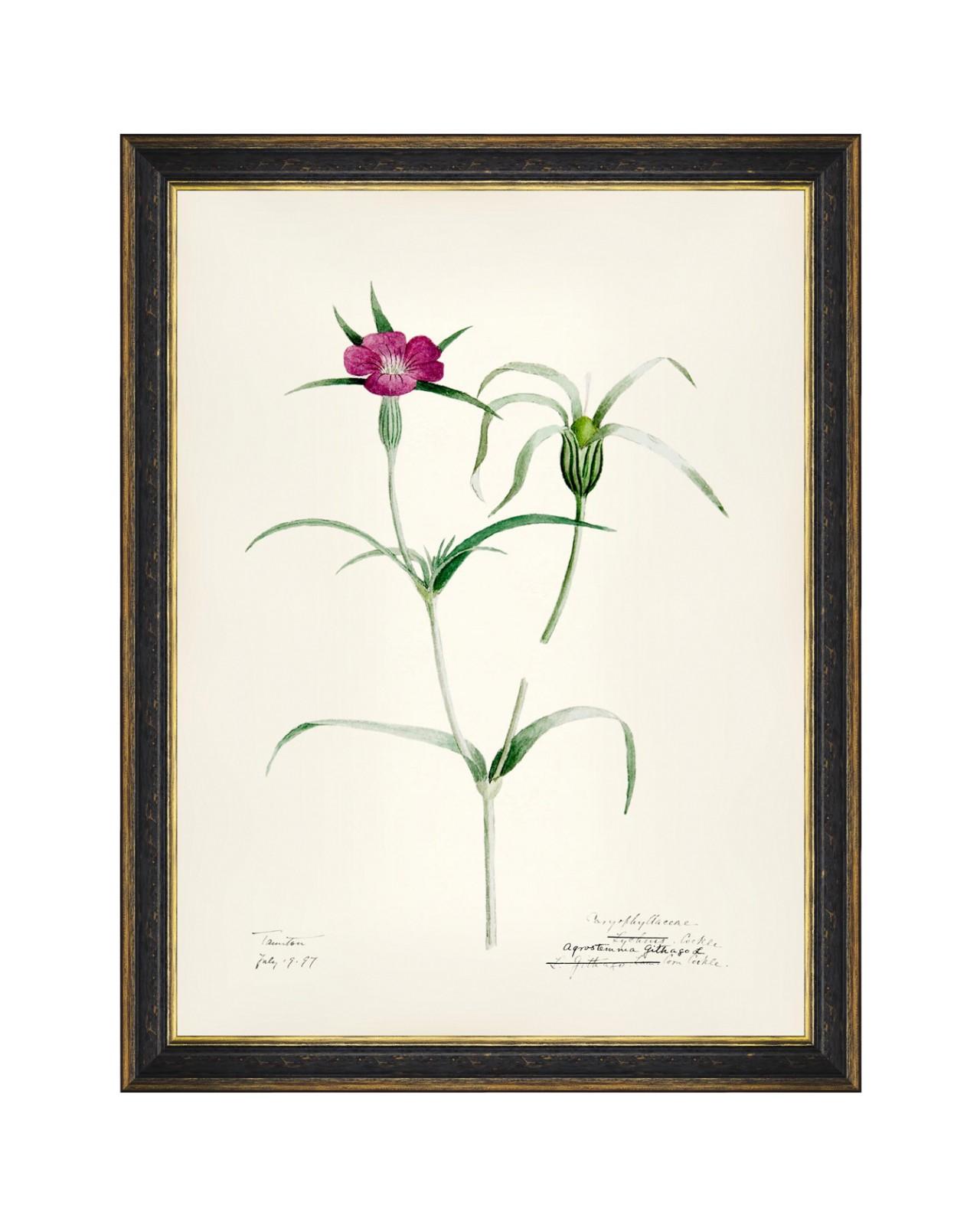 AQUAFLORA VI Framed Art