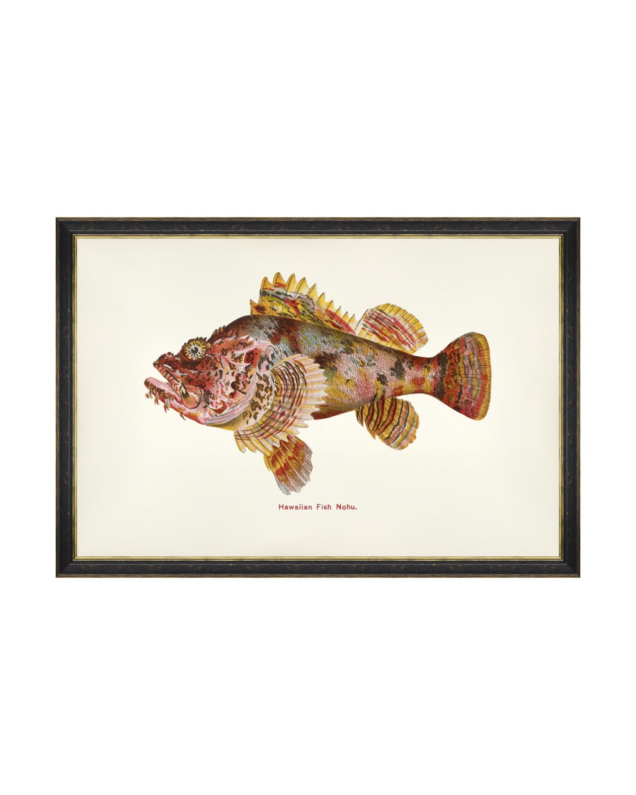 FISHES OF HAWAII - NOHU FISH Framed Art