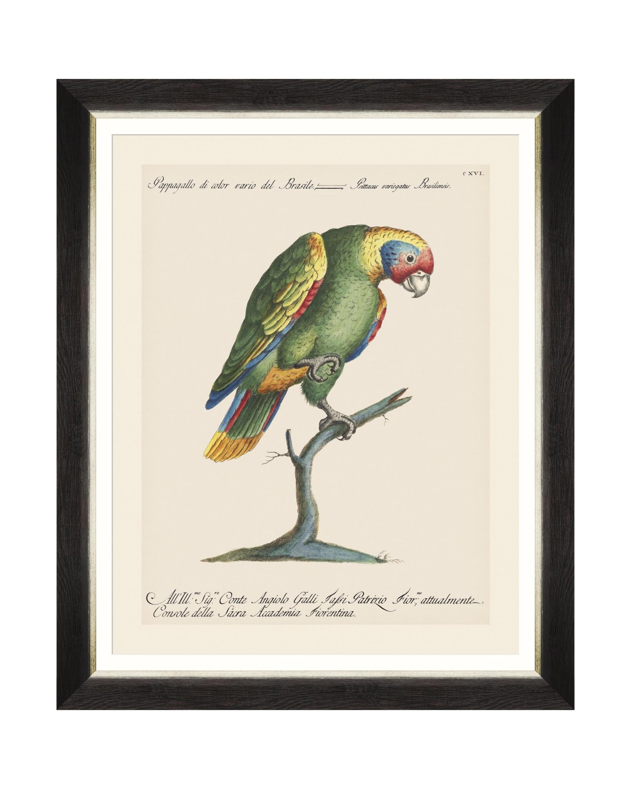 PARROTS OF BRAZIL IX Framed Art